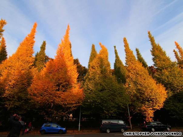 Beautiful autumnal scenes in Tokyo