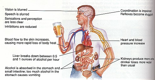 effects of drinking