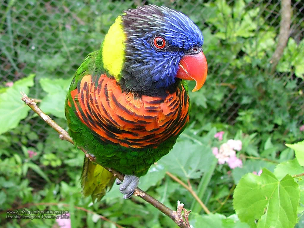 Beautiful Colorful Cute Birds Wallpapers (10)