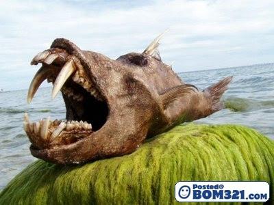 Ikan Dengan Rupa Yang Ngeri