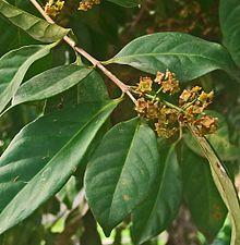 Obat asam urat tradisional manjur dan ampuh atasi nyeri dalam waktu singkat - terbaru5.blogspot.com