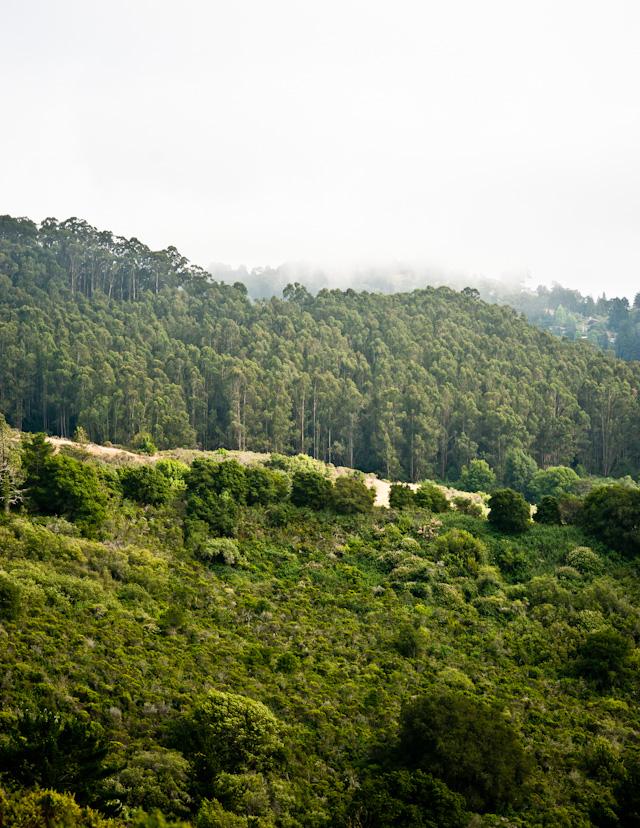 tgif: the berkeley hills in june