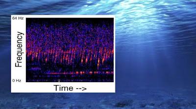 Un extraño sonido ha permeado el Océano Pacífico desde 1991 ... Origen Desconocido (Escuchalo aquí)