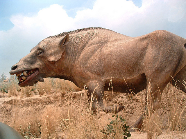 Prehistoric Pig http://www.cosmostv.org/2012/02/mysterious-dog-headed-pig-monster.html