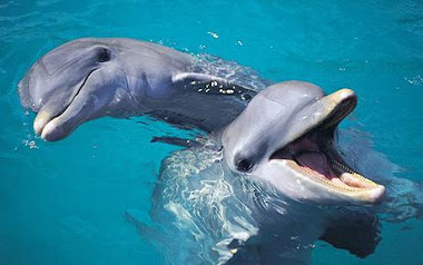 Playful Dolphins :)