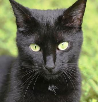 Os gatos foram colocados no mundo para refutar o dogma de que todas as coisas foram criadas...