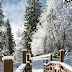 Download Winter Landscapes Live Wallpaper for Android