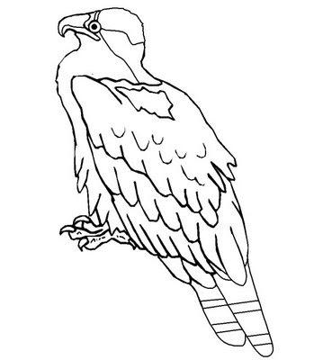 educar para a vida aves para colorir