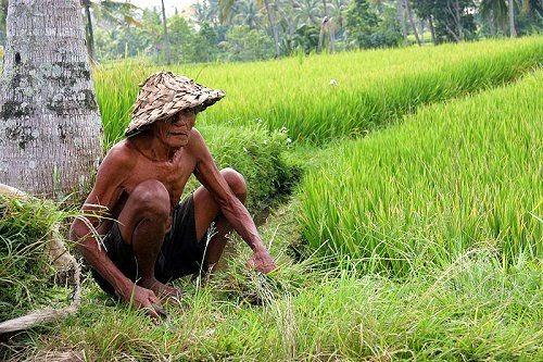 Pakar SEO Indonesia  Petani SEO