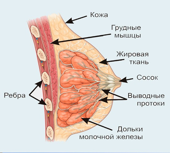 кремы для молочной железы