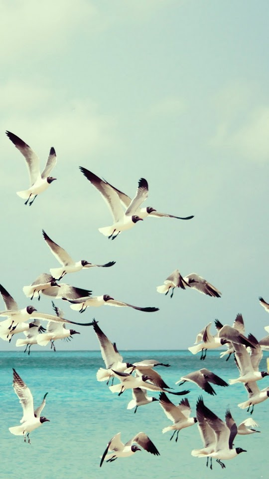Seagulls and Sea   Galaxy Note HD Wallpaper