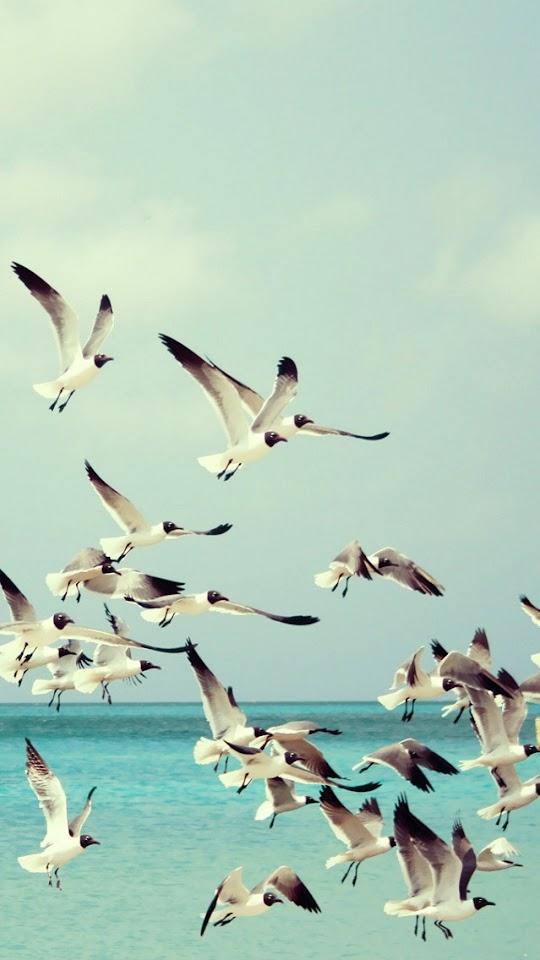 Seagulls and Sea   Galaxy Note HD Wallpaper