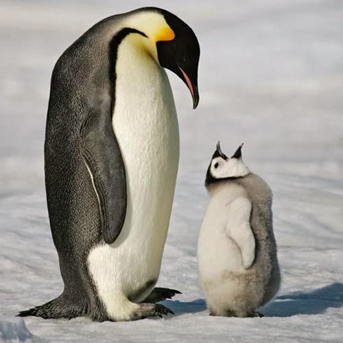 الامبراطور البطريق