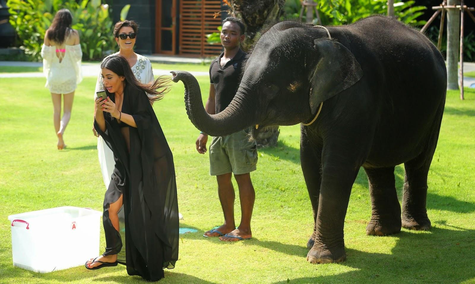 baby elephant, bikini selfie, Kardashians in Thailand, kim kardashian, whorrified,