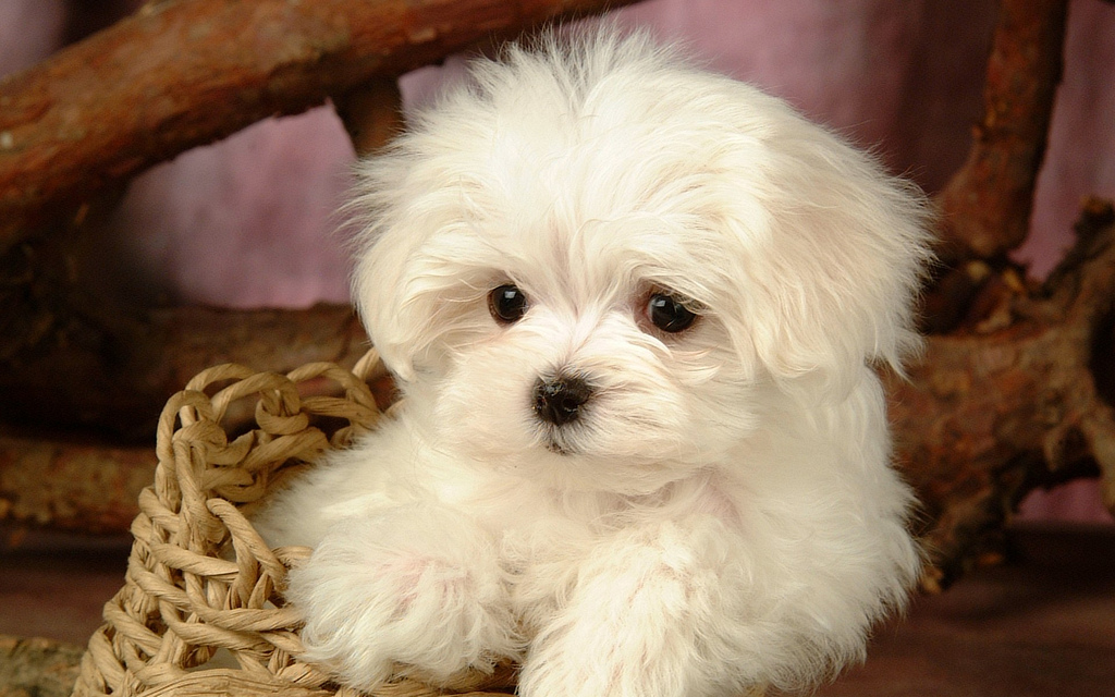 Cute puppy pictures cute dogs pictures cute dog pictures cute