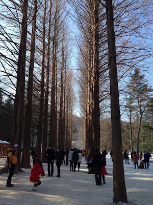 Beautifully Lined Trees at Nami Island South Korea