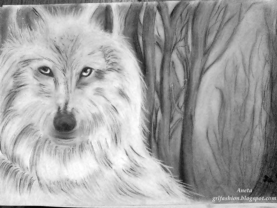 Rysunek - Biały Wilk