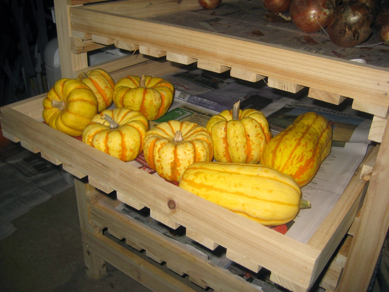storing winter squash and pumpkins susan u0027s in the garden