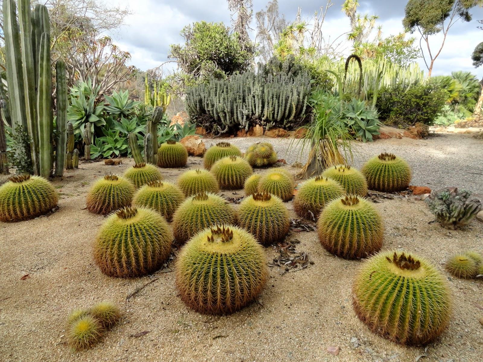 danger garden: The Old Cactus Garden at Balboa Park
