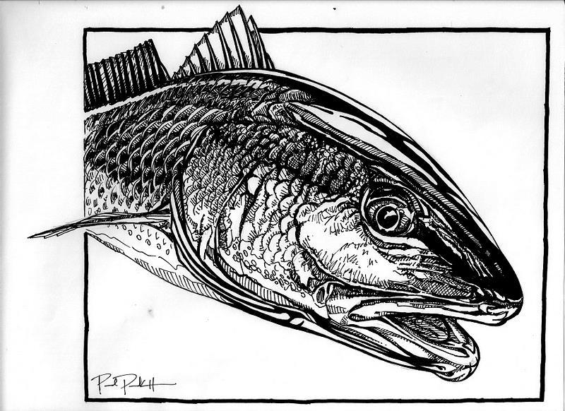 Redfish Drawing That the redfish curse hadRedfish Drawing