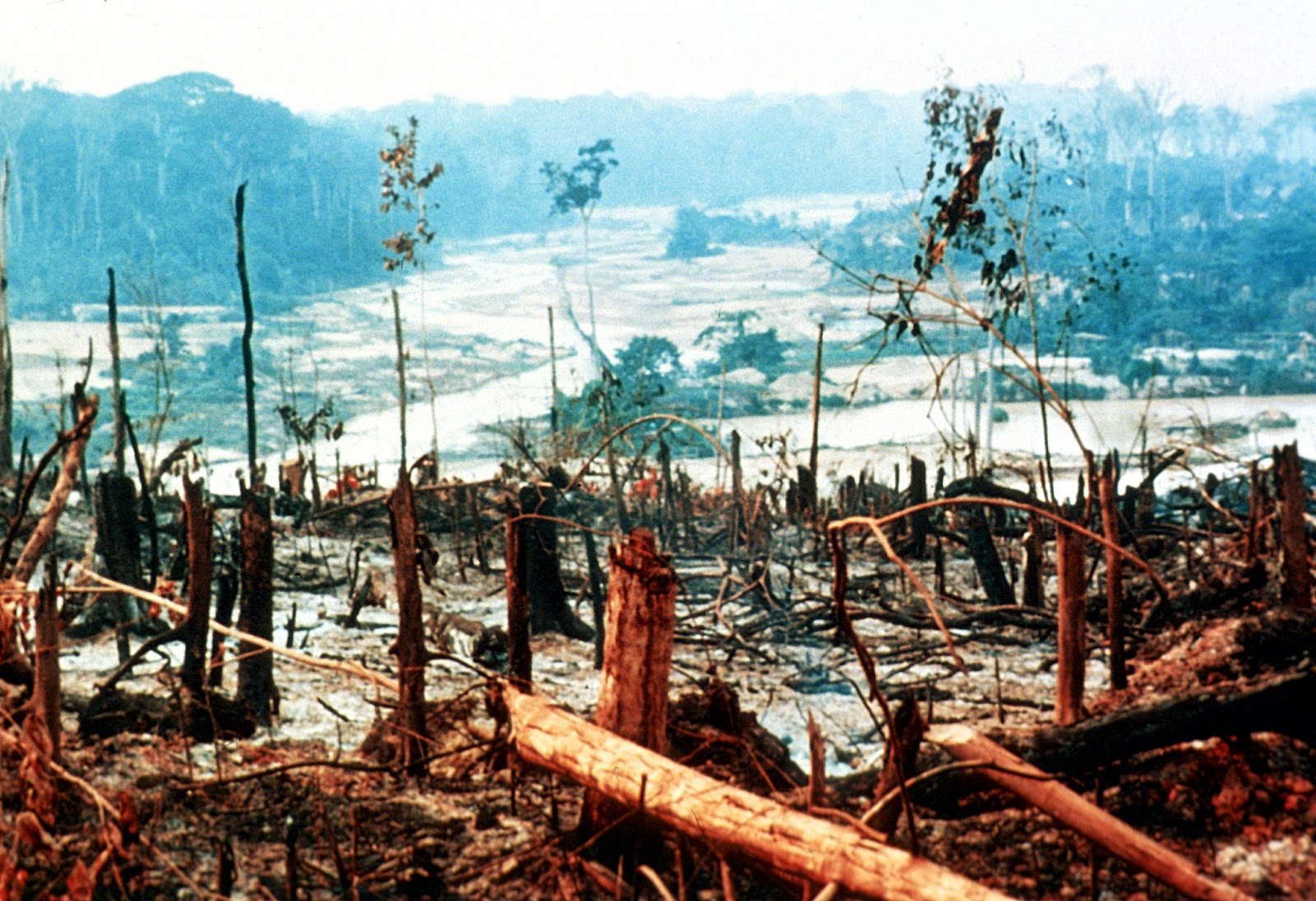 the destruction of the rain forests Protecting the amazon rain forest requires an extremely strategic, multifaceted  plan the variables contributing to its destruction are complex.
