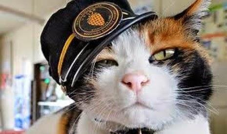 Kucing Jadi Kepala Stasiun KA