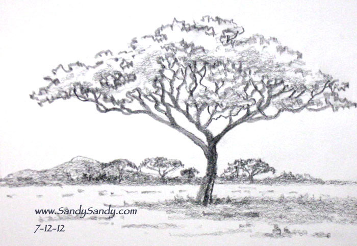 acacia tree coloring page - drawing everyday drawing plants and animals