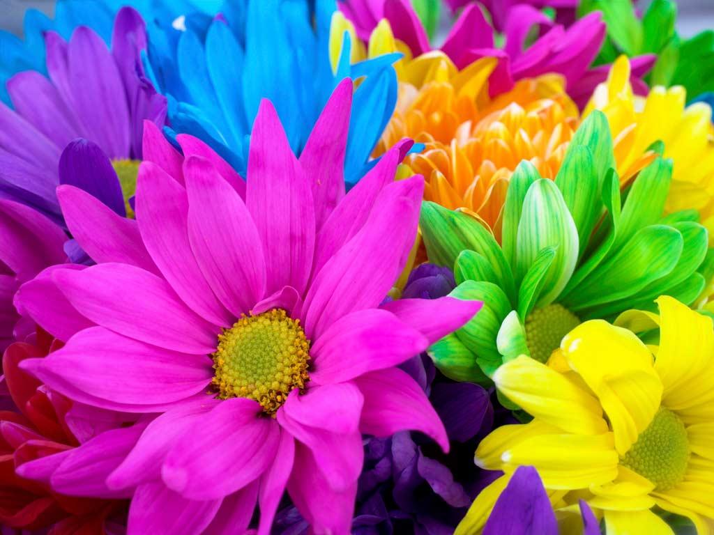 ༺♥༻* UN MUNDO DE COLORES ༺♥༻*  - Página 2 ColorfulFlowers