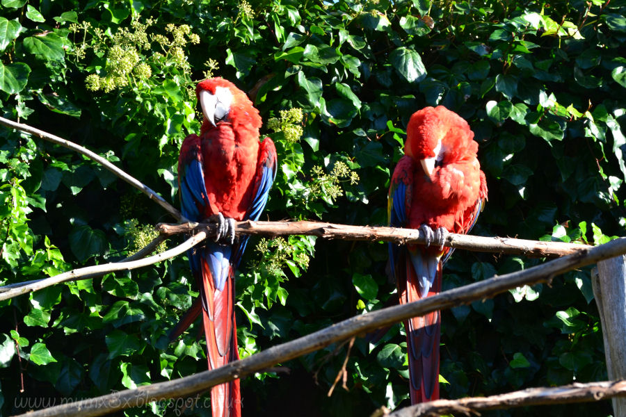 parrots at colchester zoo