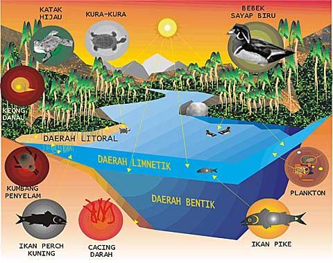 Gambar 13. empat daerah utama pada danau air tawar
