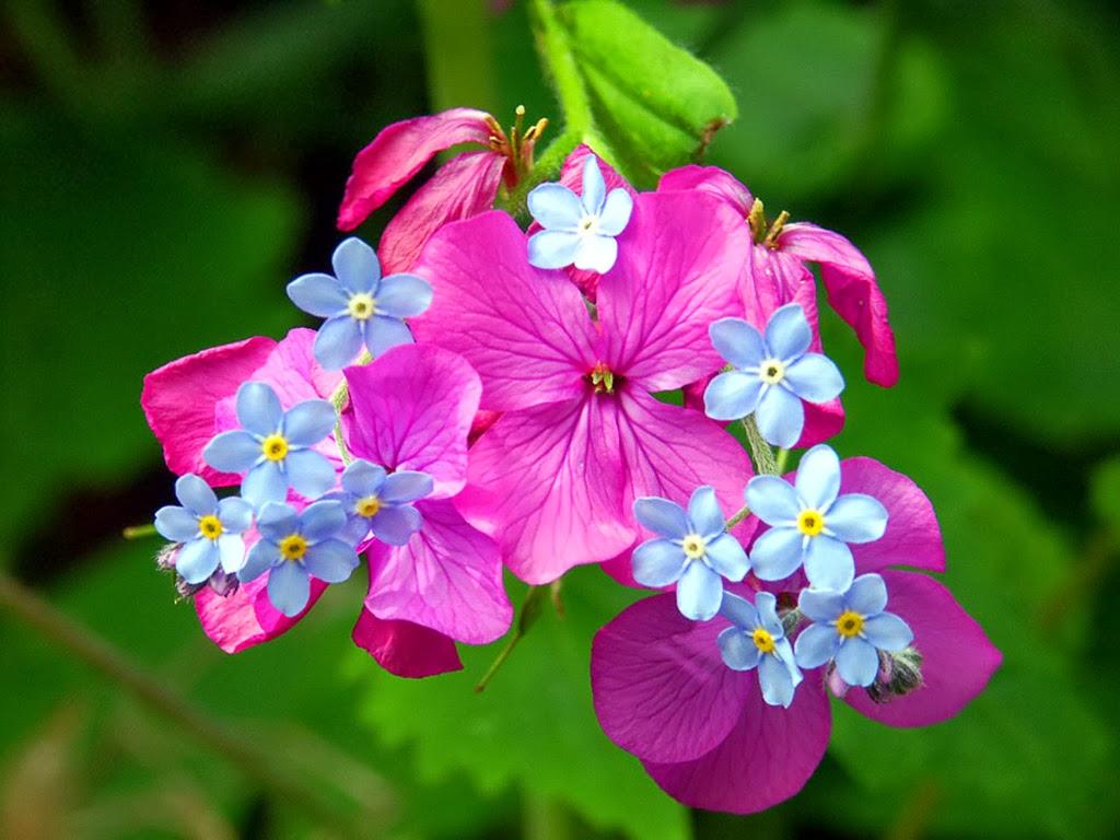 Spring Desktop Images