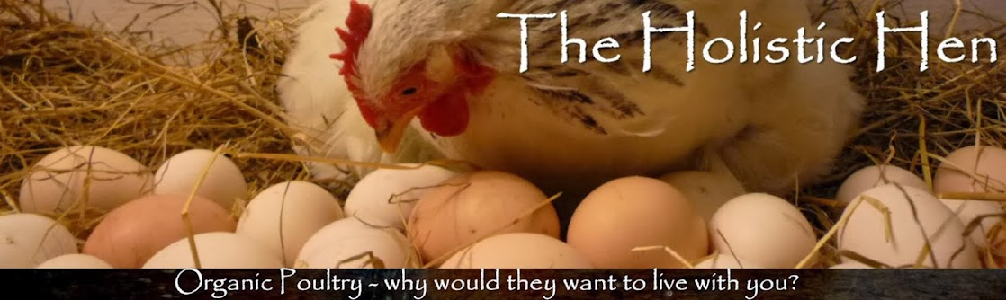 The Holistic Hen - How to raise quail, chickens and pigeons organically in a food forest