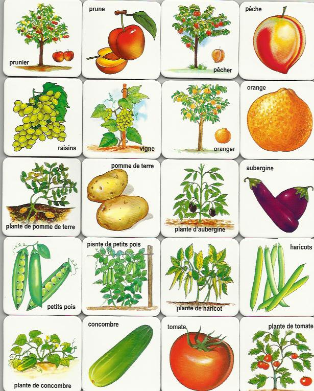 Sly image regarding printable pictures of vegetables