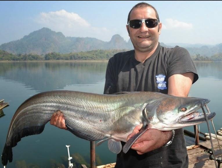 Big fishes of the world catfish wallago attu wallago attu for Biggest fish ever caught