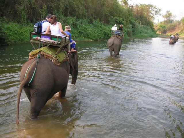escursione in elefante thailandia chiang mai
