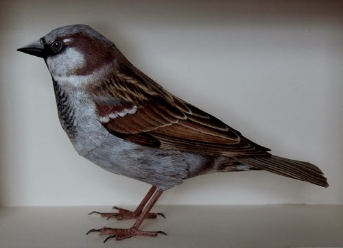 08-House-Sparrow-Johan-Scherft-Living-Paper-Birds-Sculptures-Watercolours-www-designstack-co