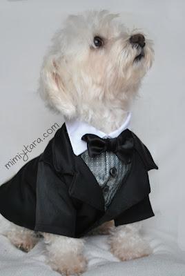 perro elegante