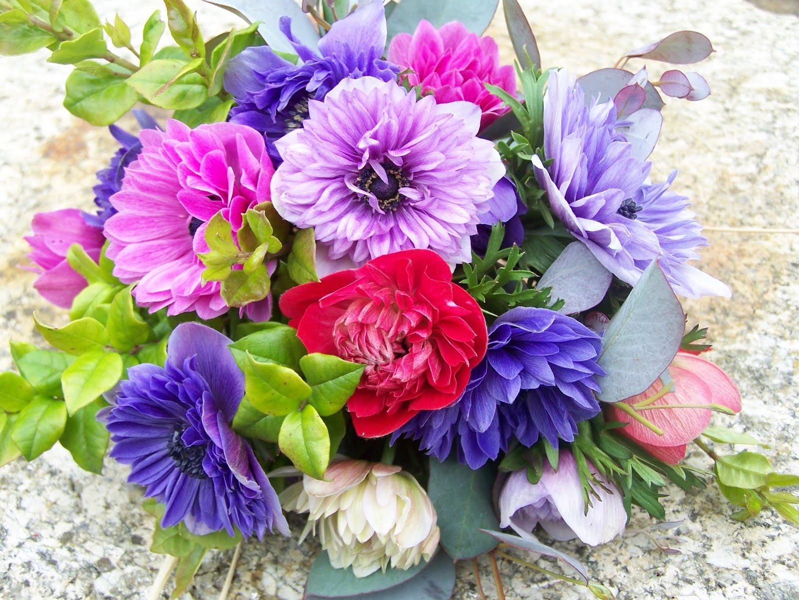 Цветок анемона посадка и уход, фото, выращивание и виды 45
