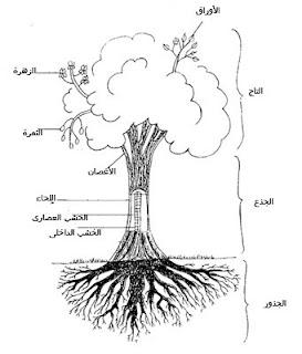 اجزاء النبات صور   الابتدائي 1743.jpg