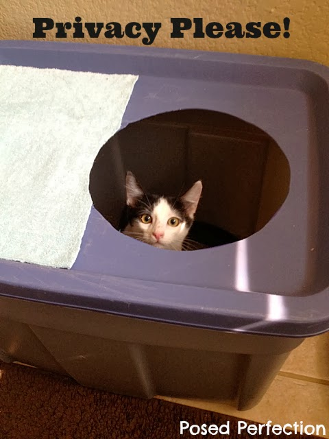 Now That The Lid Was Finished, I Filled Up The Box With Fresh Litter And  Put Little Oliver In It. He Took Right To It And Had No Problems Adjusting  To The ...
