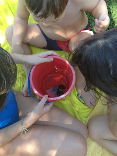 niños, rana, animales, verano, vacaciones, hijos