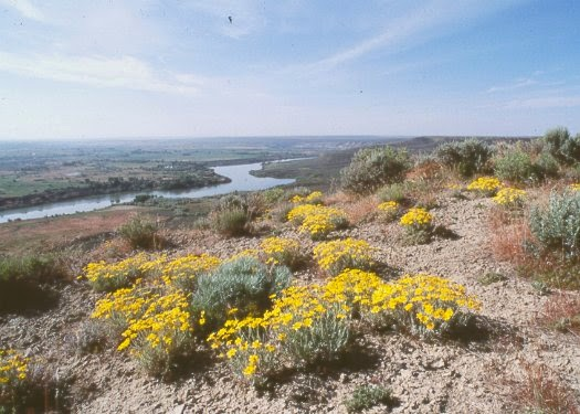 hagerman fossil beds