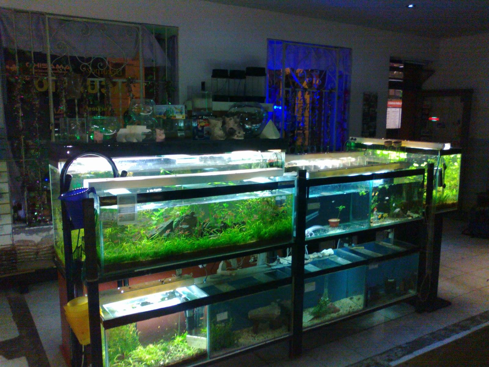 Acuarios decorpez dise o de acuarios a domicilio for Disenos de acuarios