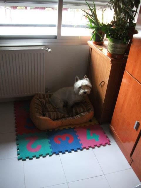 paseador y cuidador de perros  madrid