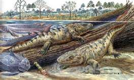Dispatches from the Frontier: The first land vertebrates