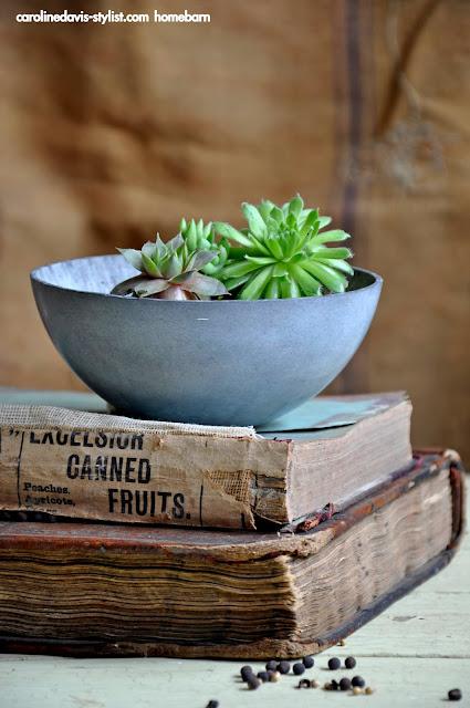 ISSUUHOMEBARNCAROLINEDAVIS_trenddaily blog_stylingdetails_launch_vintage_interiors-styling_lookbook_cacti_succulents