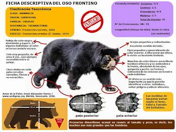 Ficha descriptiva del oso andino.