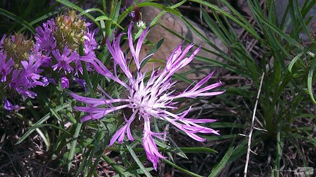 flora-pantano-de-foix
