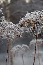Talvikuorrutus