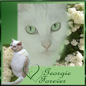 R.I.P. Georgie